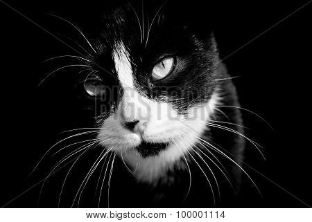 Closeup of black and white cat