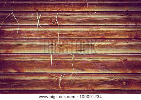 Wood texture background with plant growing outwards