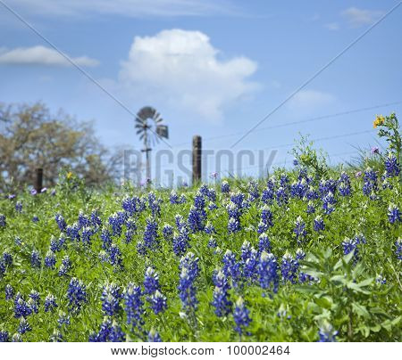 Texas Bluebonnets On Hillside With Windmill In Background
