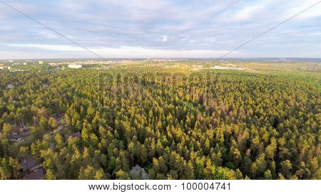 Forest with cityscape on horizon at summer sunny day. Aerial view