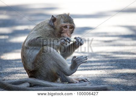 Monkeys eating