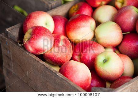Box full of fine ripe apples