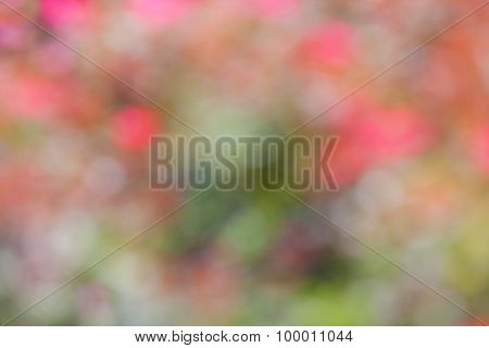 Lovely Floral Bokeh