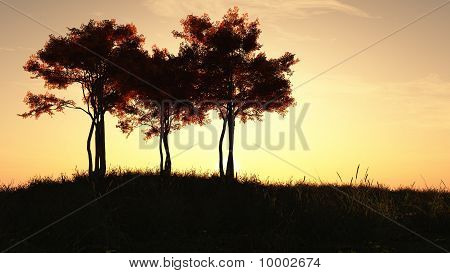 Autumn Trees at Sunrise