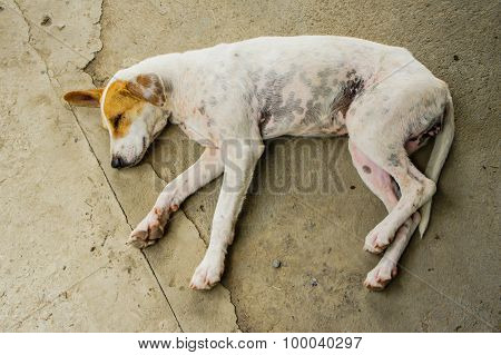 Homeless Sleeping Dogs.
