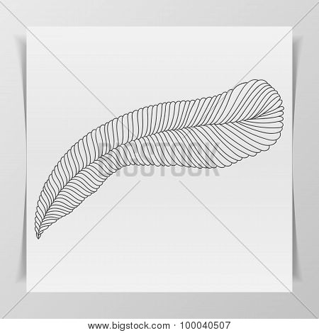Hand-drawn Feather