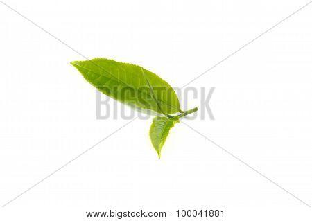 Tea Leaves On White Background.