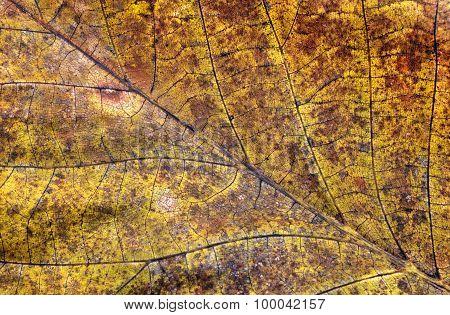 Dry autumn leaf background closeup