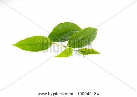 Green Tea Leaves On White Background.