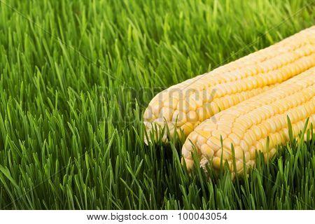 Corn On The Green Grass
