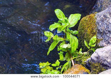 Plants Growing Near The Water