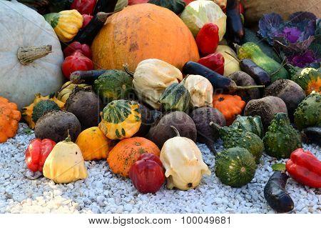 Different autumn vegetables: pumpkin, eggplant, zucchini, cauliflower