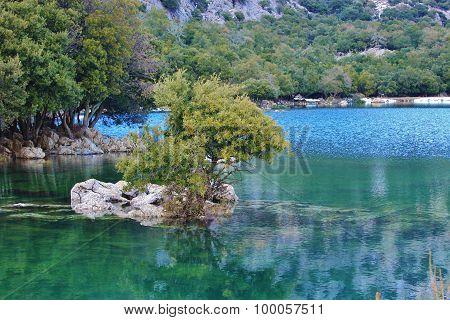 árbol en medio del agua clavado en una roca