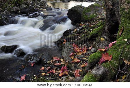 Scenic stream in autumn
