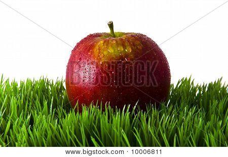 Apple in green grass.