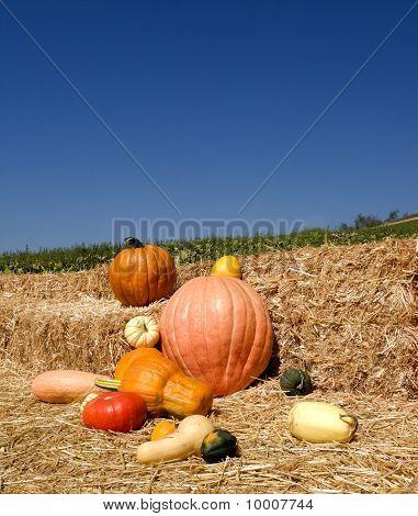Ripe Pumpkin Time