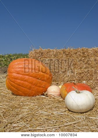 Orange And White Pumpkin Display