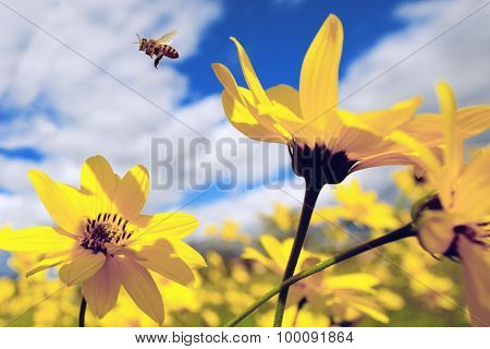The bee over the yellow flower