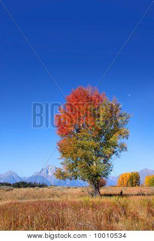 Tall autumn tree