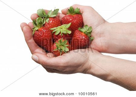 strawberries in the hands isolated on white background