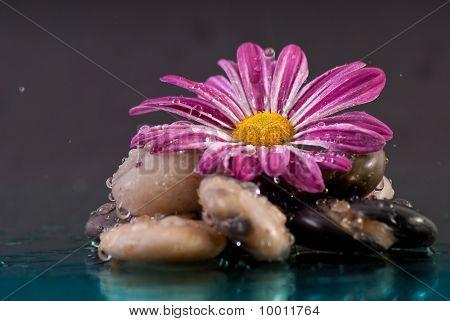 Purple Flower On Rock Formation