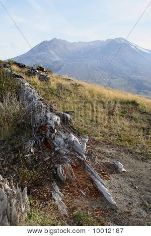 Mt St Helens With Fallen Log
