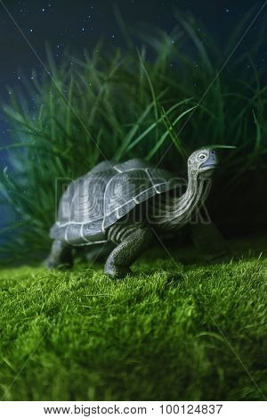 Toy turtle walking on grass at night
