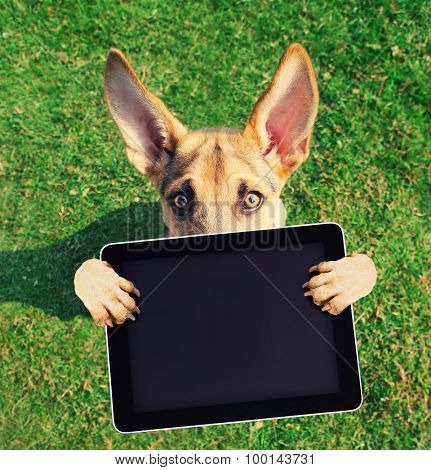 a cute german shepherd with his paws in the air holding a blank tablet on green grass toned with a retro vintage instagram filter