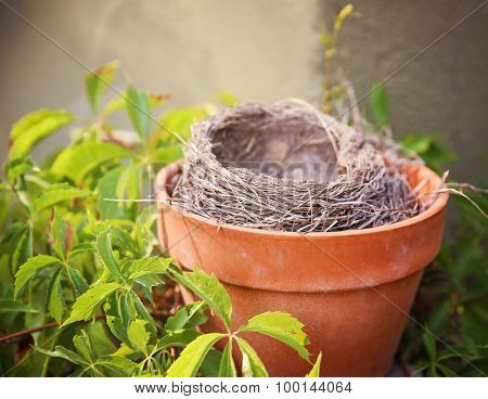 an empty bird nest in a terra cotta pot surrounded by vines and leaves