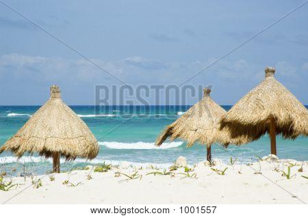 Grass Beach Umberllas