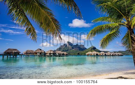 Bora Bora framed by palm trees