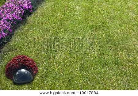 Flower, Grass Like A Frame
