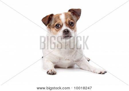 Cute Mixed Breed Dog