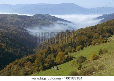 Autumn Landscape With Mist