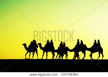 Camels silhouettes in dunes on sunset