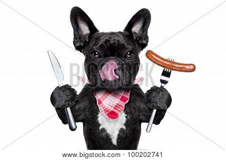 Hungry Dog  With Sausage