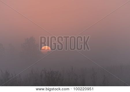 Marsh Fog Sunrise