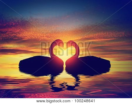 Two swans making a heart shape at sunset. Valentine's day romantic concept
