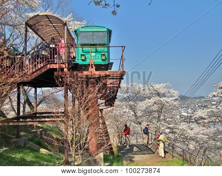 Unidentified Tourists and Slope car passing through tunnel of cherry blossom (Sakura)