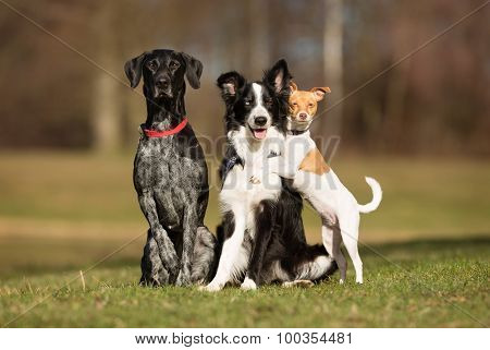 Three Dog Outdoors In Nature