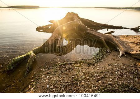 snag on the shore of a small pond at sunset