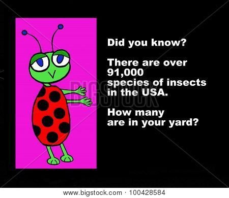 91,000 Species of Insects