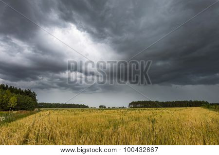 Summer Landscape With Storm Sky Over Rye Field