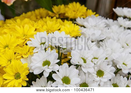 Yellow And White Bunch Of Flowers