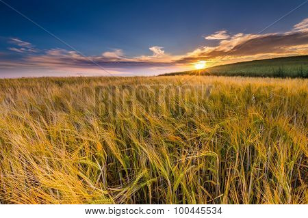 Beautiful Landscape Of Sunset Over Corn Field At Summer