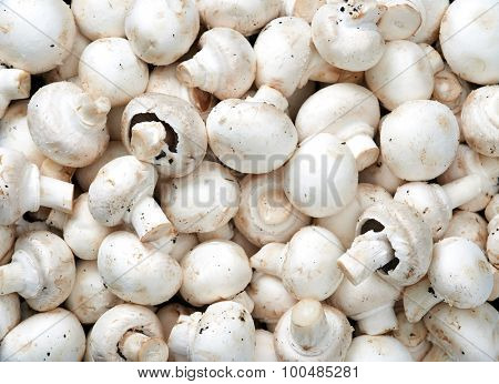 Mushrooms Raw fruit and vegetable backgrounds overhead perspective, part of a set collection of healthy organic fresh produce