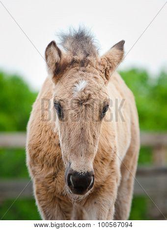 cute foal in paddock front view closeup poster