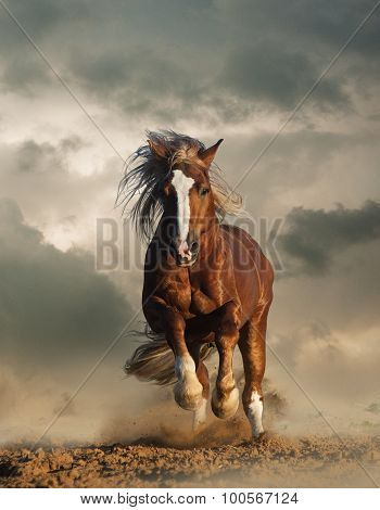 Wild Chesnut Draft Horse