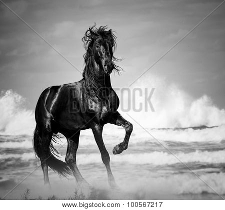 Black Stallion By The Seaside