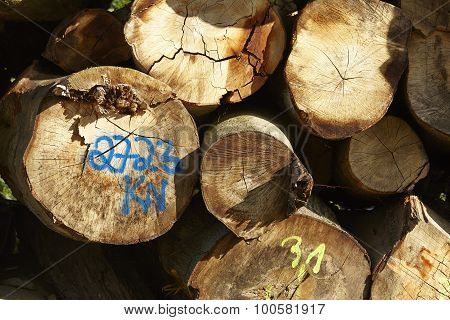 Pile Of Tree Trunks